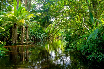 Amazońska dżungla