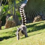Madagaskar – wyspa na końcu świata