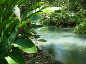 natura Jamajki
